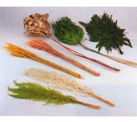 Series of dried flowers products